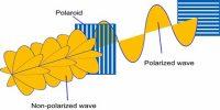Polarization of Light