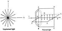 Definition: Unpolarized, Polarized and Plane Polarized Light