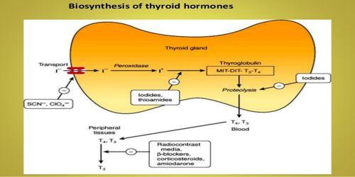 Biosynthesis of Thyroid Hormone