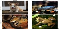 Difference between Homeothermic and Poikilothermic Animal