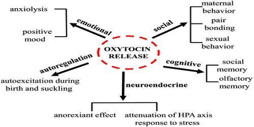 Functions of Oxytocin
