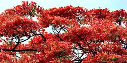 Flower of Bangladesh
