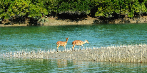 A Visit to the Sundarbans