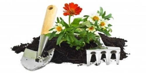 My Favorite Hobby: Gardening
