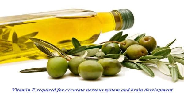Vitamin E required for accurate nervous system and brain development