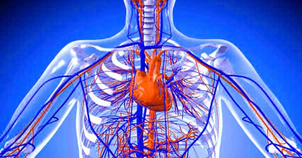 Researchers develop biodegradable electronic blood vessels