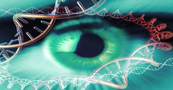 Promising Gene therapy Restoring Vision