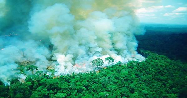 Brazil's Amazon rainforest has reached its highest level since 2008