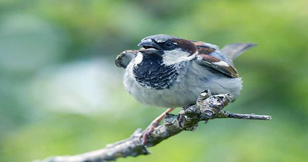 Some birds can't wait for their young holiday home