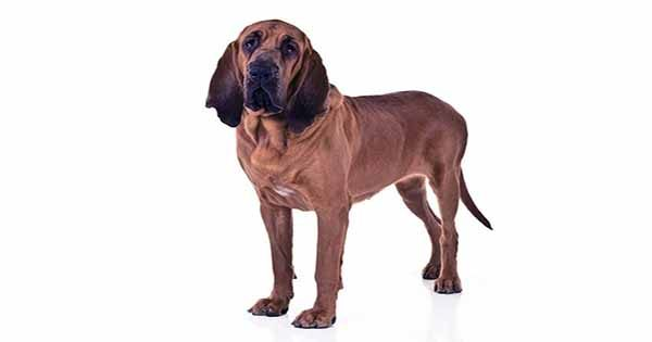 """The """"Bloodhound"""" laser may soon test your breathing for disease"""