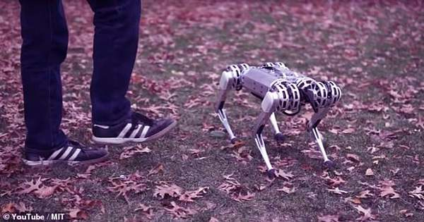 "The MIT's Back-flipping ""Mini Cheetah"" Robot Is Lighter, Stealthier Than Ever"