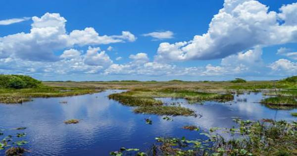 The vast wetlands of Els Eels are the most recorded at the bottom of the ocean