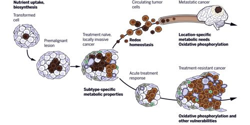 Abundant Enzyme in Tumor Cells cans Monitor Cancer Treatment 1