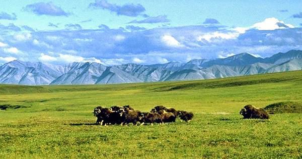 Alaskan Arctic Wildlife Refuge Is Now Open For Oil Drilling