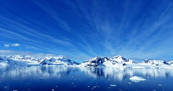 Ancient Soil Suggests Antarctica May Have Been a Rainforest 90 Million Years Ago