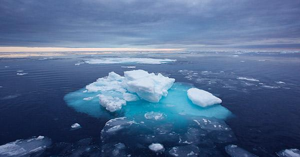 Arctic Ocean Acidification Is Expected To Get Worse, Threatening Entire Food Chains