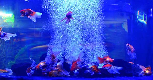 Body and Ocean Scanning Acoustic Frequency Combs Made Using Fish Tank Bubbles