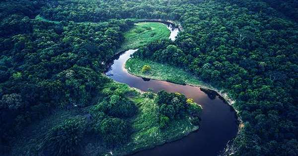 Deforestation in the Brazilian Amazon Has Increased By 25 Percent since Last Year