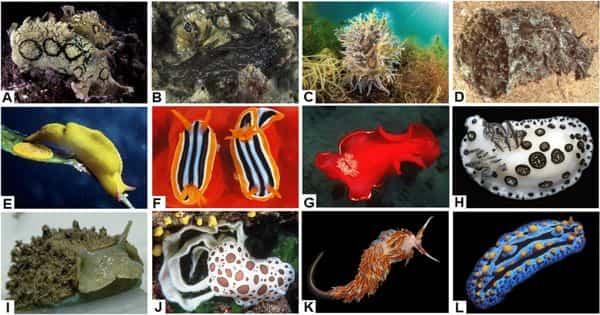 Immune Responses Biomarkers in four economically important marine mollusc species