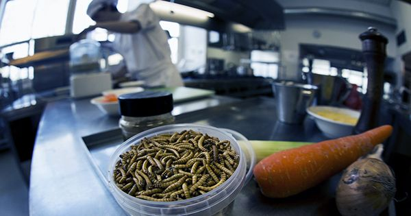 Mealworms Approved For Consumption In The EU: Will You Be Switching To An Insect Diet?