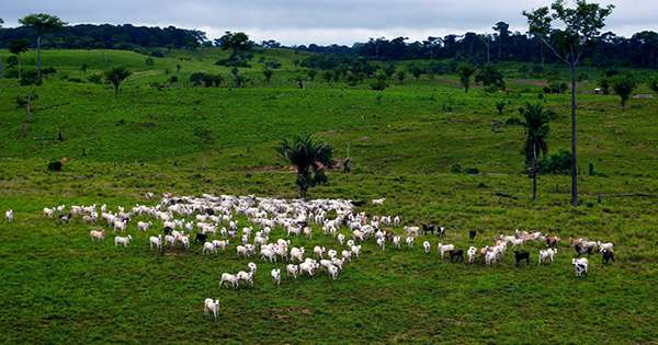 Report Finds, Imports of soy and beef to the EU come from Illegally Deforested Land in Brazil
