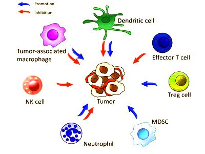Researchers identify a novel mechanism by which tumors progress 1