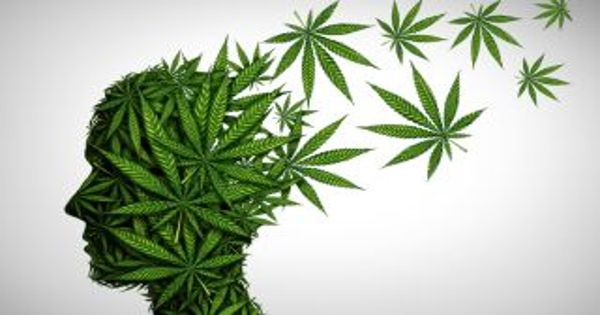 Researchers reports on health risks of chemicals in tobacco and marijuana smoke