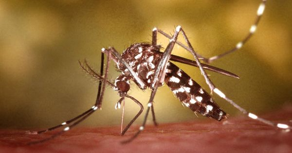 Researchers reveal a new genomics resource of small RNAs in mosquito cells
