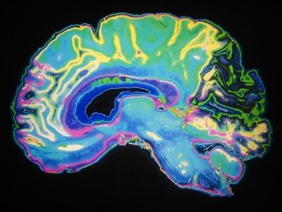 Researcher's shows Loneliness is wired into the human brain 1