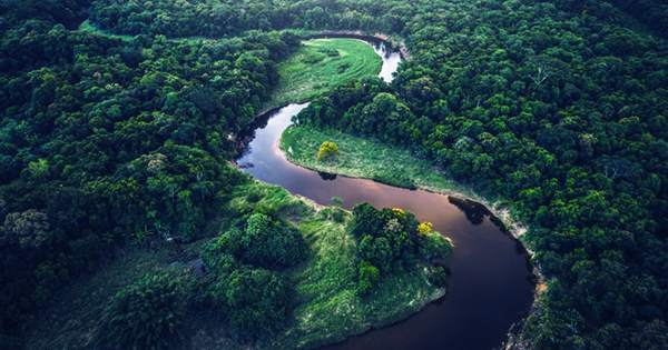 Satellite Image Alerts Are Helping Save Rainforests in Africa
