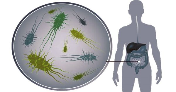 Scientists Confirm Gut Health Affects the Healthy Immune System