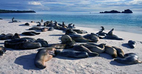 Scientists Unlock Mystery of How the Galápagos Islands Maintain Such a Wildly Rich Ecosystem