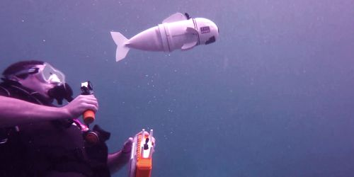 Scientists develop Underwater Robotic swarm that swims like a school of fish 1