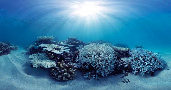 The Great Barrier Reef's Latest Bleaching Event Is the Most Widespread Yet