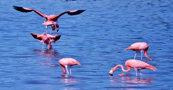 The flamingo nest of the late Natron's near the pond is almost corrosive as bleach