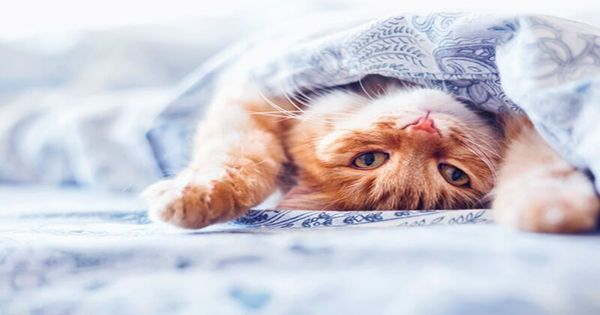Cats Don't Just Get High from Catnip – It Protects Them As Well