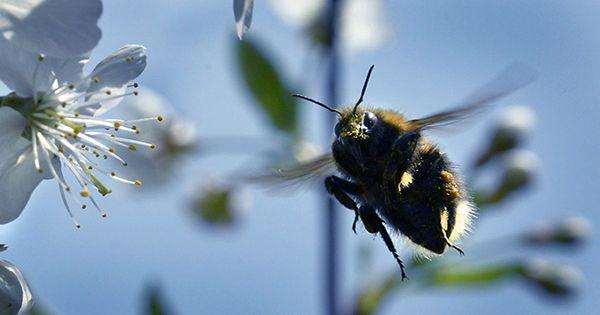 Climate Change Is Making Allergy Season Last Longer