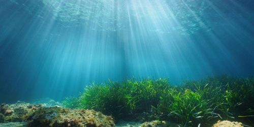 For healthy oceans ecosystems need well acoustic environment 1