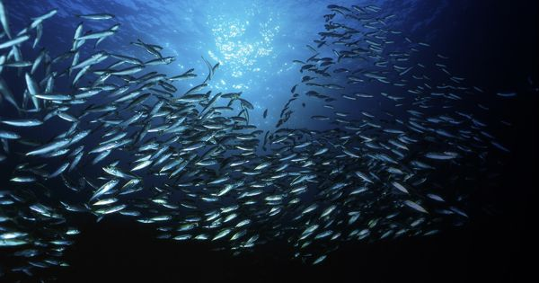 For healthy oceans ecosystems need well acoustic environment