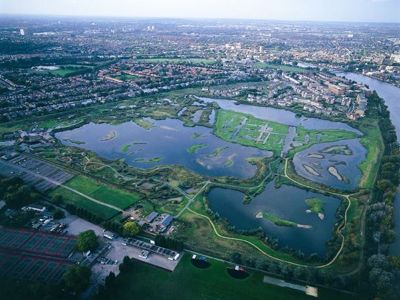 Importance of Wetlands for Healthy Wellbeing 1