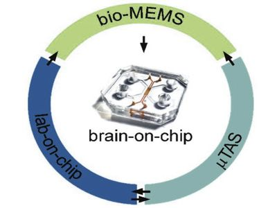 Scientists are physically integrating human brain stem cells into AI microchips 1