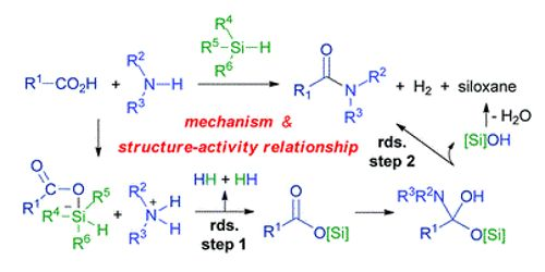 Scientists introduced new type of reaction of amide bonds under mild conditions 1
