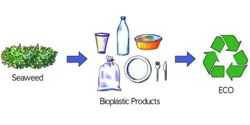 Sustainability of plant-based bioplastics depends largely on the country 1