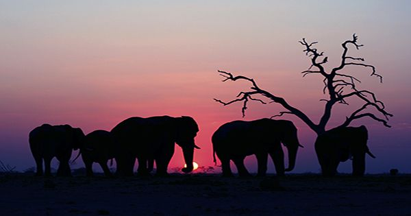 The Internet Appears To Believe Elephants Worship The Moon