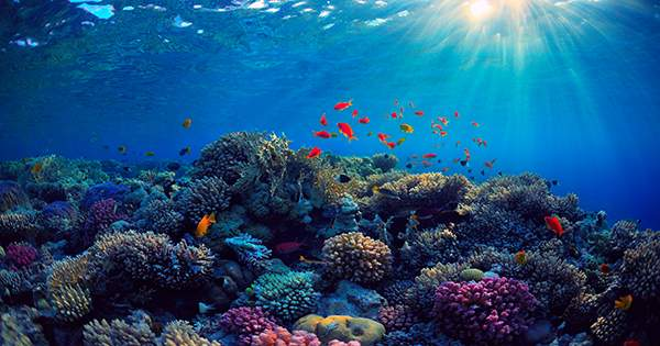 """Walking Colon"" Sea Cucumbers Poop ""Five Eiffel Towers"" Per Coral Reef Annually"