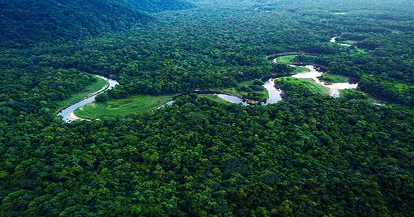 Amazon Rainforest May Now Warm The Planet More Than It Cools It After Decades Of Degradation