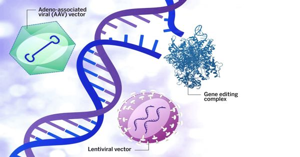 Beneficial-effects-of-gene-therapy-seen-decades-after-the-transplanted-blood-stem-cells-1