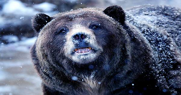 Cocaine Bear: The True Story Of A Bear That Ate 70 Pounds Of Cocaine