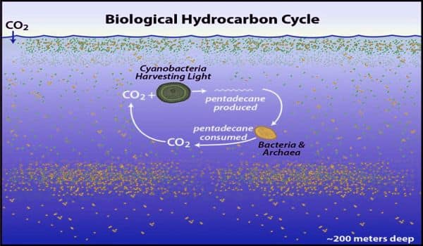 Huge-hydrocarbon-cycle-revealed-in-neglected-area-of-ocean-1