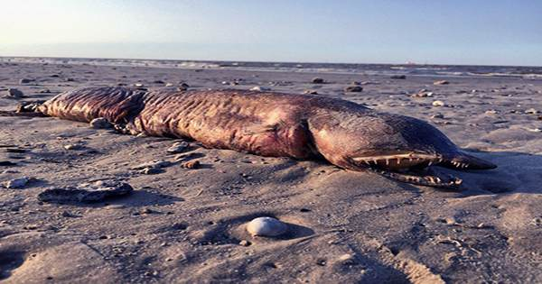 Mysterious 8-Meter-Long Faceless Sea Creature Found On Welsh Beach